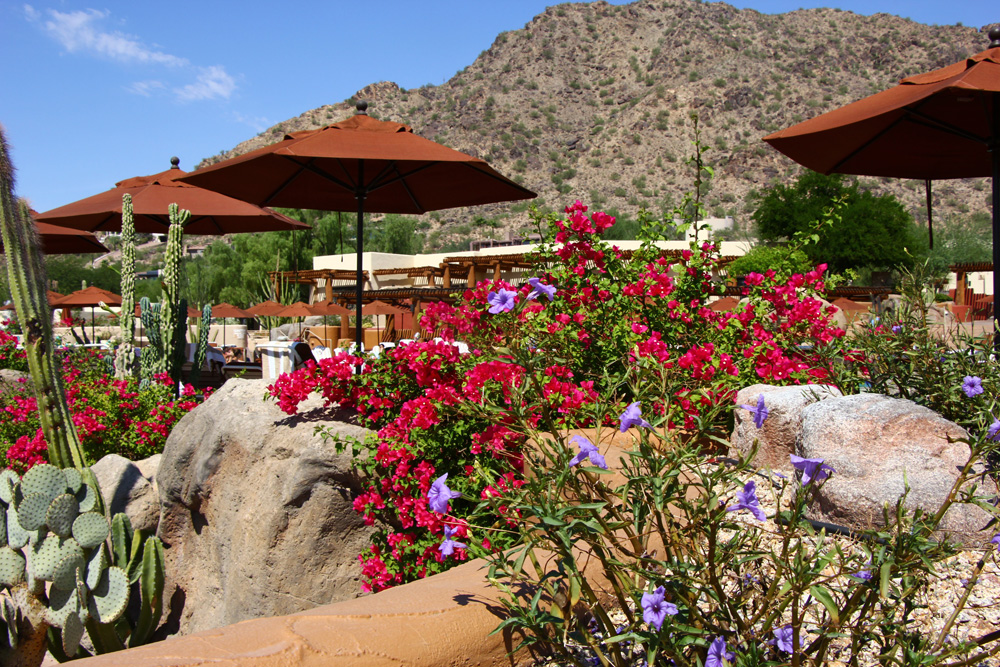 poolside-desert-camelback-inn-scottsdale-arizona
